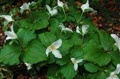 Keeping It Green Nursery Plum Garden, Lawn, Plant Leaves, Bloom, Nursery, Green, Plants, Robin, Mountain