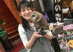 """How would you like to visit unique cafe in the heart of Asakusa? A charming jungle forest full of feathery friends await you at Owl no Mori! This """"Forest of Owls"""" is home to 30 owls of 17 different breeds, both big and small, as well as a few other animals. LIVE JAPAN stopped by the cafe for a visit with creatures, both feathery and furry!"""