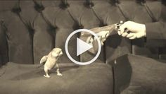 Bang Funny Animal Videos, Funny Animal Pictures, Funny Images, Cute Puppies, Cute Dogs, Dogs And Puppies, Animals And Pets, Funny Animals, Cat Info