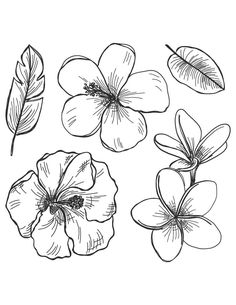 nature drawing for kids ; Flowers Illustration, Floral Illustrations, Illustration Art, Nature Drawing For Kids, Dibujos Cute, Aesthetic Drawing, Art Sketchbook, Color Tattoo, Easy Drawings