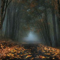 Autumn Mist, Oregon.