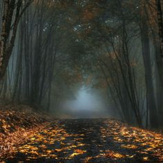 Autumn Mist, Oregon