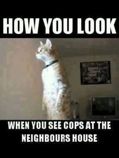 dog vs humor Cats are cute and sometimes unintentionally do stupid funny things, so we have collected some the funniest and most hilarious cat memes and pictures hope you will enjoy em. Lol, Haha Funny, Funny Cute, Funny Shit, Hilarious, Funny Stuff, Funny Things, Funny Animal Memes, Cat Memes