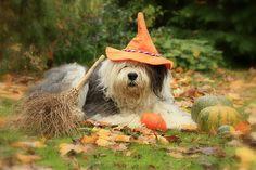 Happy halloween by dewollewei, via Flickr