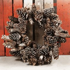 Pine Cone Wreaths Natural Sugar Pine Cone Frosted 24""
