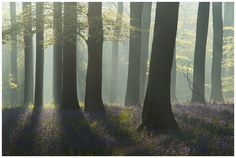 Atmospheric bluebell forest. Micheldever. UK. OC (2048x1400] - Author: gregoryknowles