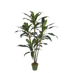 Artificial 5.5ft Cordyline Tree