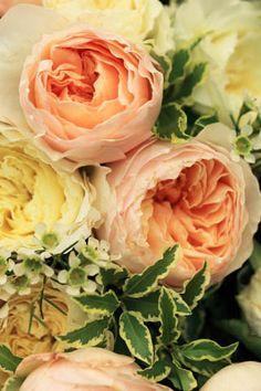 romantische David Austin rozen in pastel