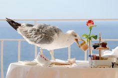 Animal: Seagull