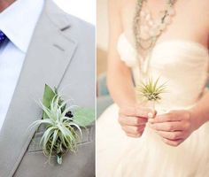 Air plants wedding
