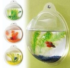 Awesome fish home