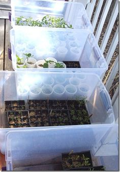 Mini Greenhouses  Just clear plastic storage boxes, group the plants in them according to their cold tolerance.  That way you can pick up a box and pop in the house when it's too cold for them.  It's also easier to move plants around to find them more (or less) sun exposure.