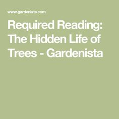 Required Reading: The Hidden Life of Trees - Gardenista