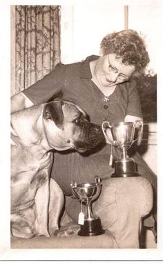 LARGE BULLMASTIFF DOG WITH LADY - LOOKING AT SILVER PRIZE CUPS OLD PHOTOGRAPH