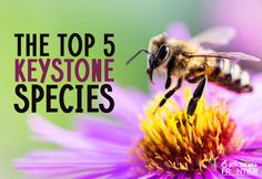 The Top 5 Keystone Species Biology Lessons, Science Biology, Teaching Biology, Earth Science, Life Science, Teaching Plan, Student Teaching, Ap Environmental Science, Keystone Species