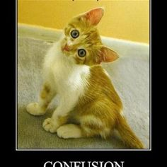 Funny Cat Motivational Posters Funny Pictures With Captions, Funny Captions, Cute Animal Pictures, Funny Images, Bing Images, Picture Captions, Funny Photos, Animal Captions, Kittens Cutest