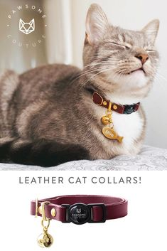 A stunning Cat Collar made from beautiful soft leather with a quick release safety buckle, our breakaway leather cat collars are super comfortable against your cats skin. Leather Cat Collars, Cat Skin, Soft Leather, Safety, Fancy, Couture, Cats, Beautiful, Security Guard
