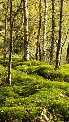 wunderschöne Wälder im Nationalpark #Nuuksio