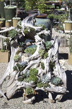 26 propostas de jardins de suculentas ideais ao redor do mundo # Succulentgardenideas # Su - Garten Dekoration - Succulent Gardening, Cacti And Succulents, Planting Succulents, Succulent Rock Garden, Organic Gardening, Dream Garden, Garden Art, Rain Garden, Driftwood Planters