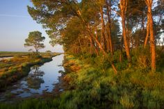 Morning in the delta. The Karavasta Lagoons National Park, Albania  © Anders Geidemark / Wild Wonders of Europe