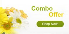 send flowers to Noida at fast services delivery. http://flowershop18.in/flowers-to-noida.aspx