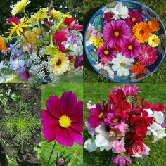 From seed to bloom to colourful posies and flower bowls. All in a days creating on my flower farm.