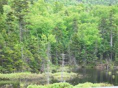 Pinkham Notch, New Hampshire