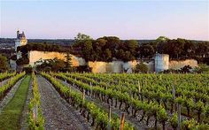 The chateau de Chinon tower among vineyards- the Loire, perfect break