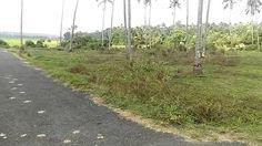 40 Cent Residential Plot near Palakkal,Thrissur