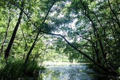 Velvet - Nyár - És azt tudta, hogy Tatán van egy eldugott tündérország? Hungary, River, Plants, Outdoor, Outdoors, Planters, Outdoor Games, Outdoor Living, Rivers