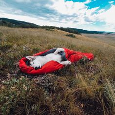 To celebrate #nationaldogday, here's the adorable @loki_the_wolfdog all wrapped up like a sleeping burrito. Share your best dog moments with us by clicking the link in our profile.  #gopro