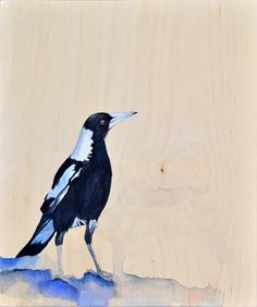 Magpie in the sun, Australian Magpie, Painting, Lydia Paton, Gouache and pencil on Birch Wood Panel