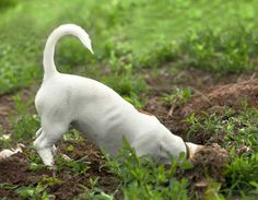 Does your dog like to dig up the backyard? Beware of these hidden dangers!