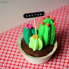 cactus para casas sin luz.