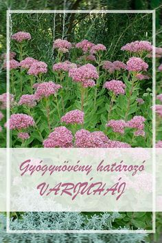Medicinal Plants, Doterra, Herbs, Health, Therapy, Health Care, Herb, Healing Herbs, Herbal Medicine