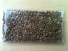 Great quality weed seeds for sale online: read here what to look for when doing an indoor grow from germinating to harvesting your own quality marijuana. http://growing.proseeds.com/