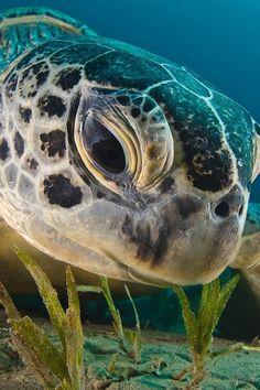 Sea turtle                                                                                                                                                                                 Mais