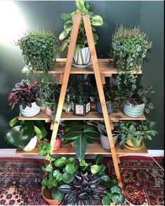 [New] The 10 Best Home Decor Ideas Today (with Pictures) - Peperomia family shelfie Photo: __ Inside Plants, Room With Plants, House Plants Decor, Plant Decor, Indoor Garden, Indoor Plants, Porch Plants, Garden Plants, Plant Shelves