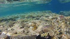 GoPro Hero 2 Snorkeling Tiran Island