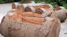 Removing Your Fallen Tree May Be a Missed Opportunity. Discover the Benefits of Dead Trees in the Environment and DIY Projects with Salvaged Wood. #diy #woodworkingprojects #tree