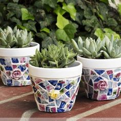 mosaic pots with broken china, container gardening, crafts, gardening, succulents