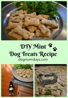 Easy to make DIY mint dog treats recipe that uses simple ingredients. For more homemade dog treat recipes, visit my blog! Homemade Dog Treats | DIY Dog Treat Recipes | Dog Mom | Recipes | DIY Dog Projects |
