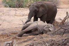 """Résultat de recherche d'images pour """"Le village du Cote d'ivoire"""""""