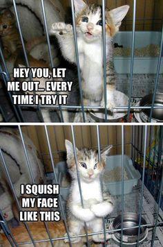 Funny Kitty. ;P