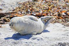 Seal harbor smiling stock photo