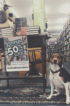 Dog Friendly bookshop + bookbindery in Galway Ireland Galway Ireland, Dog Friends, Dogs, Doggies, Pet Dogs, Dog
