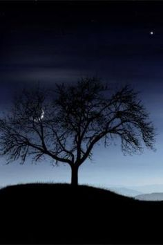 Tree Silhouette and moon