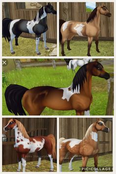 all pinto Arabians in star stable! Beautiful Horses, Animals Beautiful, Star Stable Horses, Hobby Horse, Stars At Night, Horse Love, Thoroughbred, Horse Art, My Ride