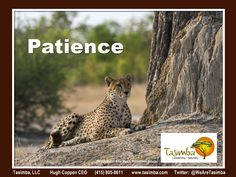 So much to learn from wildlife on a Tasimba safari! The cheetah brothers who are often found near Linkwasha - our home away from home - teach us valuable lessons in patience, listening, and 360 awareness. Want to know more? Visit www.tasimba.com