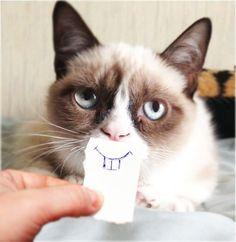 grumpy cat hates this.